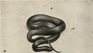 photo of coiled black snake
